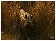 220px-rhino_from_nepal_3080551876